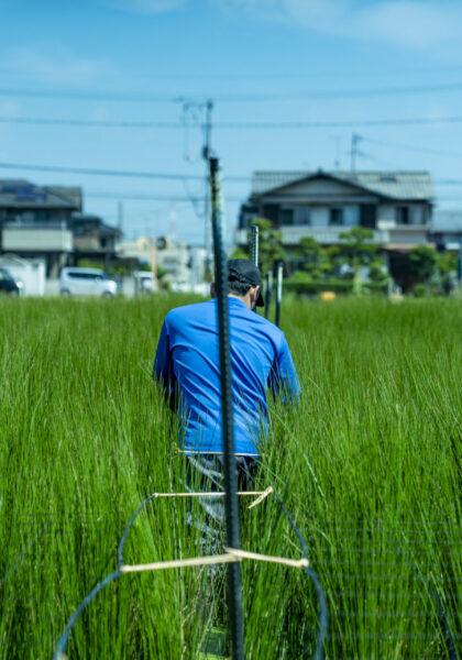 岡山とい草